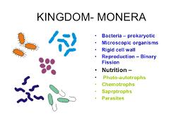 Plant Kingdom Classification Chart For Kids Plant Kingdom Classification