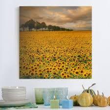 Sonnenblumen Bilder Auf Leinwand Online Kaufen Bilderwelten