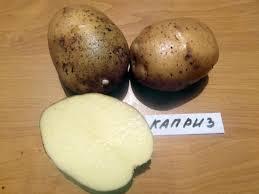 Сорта картофеля описание и фото ru Картофель Каприз