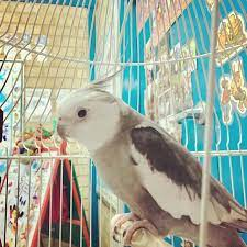 ourpetbird Instagram posts (photos and videos) - Picuki.com