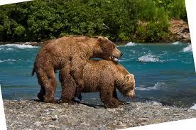 Hairy bear big gay