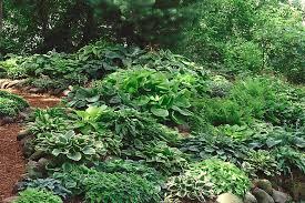 11 hosta garden design images hosta