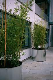 exterior circular metal bamboo at innovation court edmund street b3 office landscaping t13 office
