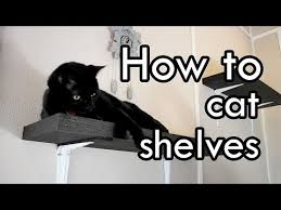 Floating Shelves For Cats Impressive How To Make Cat Shelves DIY YouTube