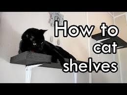 Floating Shelves For Cats Impressive How To Make Cat Shelves DIY YouTube