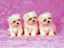 31 stunning cute pets wallpaper for puter 7te org