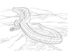 Cobra Slang Kleurplaat Malvorlage Schlange Kobra Ausmalbild 27870