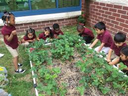 school garden grants contact learningthroughgardening gmail com picture