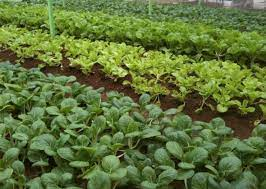 grow your own food save food cut waste