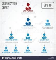 Organizational Chart Infographic Business Hierarchy Boss To