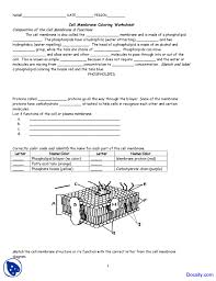 glamorous cell membrane coloring application of biology assignment glamorous cell membrane coloring application of biology assignment docsity structure and function worksheet 4ae037e0ddd9fdbe502fa3a1c21 membrane structure