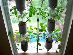 herb wall planter indoor herb planter indoor garden ideas indoor herb grower planting herbs in pots