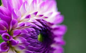 เรียนภาษาอังกฤษกับอ.บอม: Violent – Violet : สีม่วงแห่งความรุนแรง