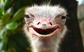 Image result for Ostrich effect