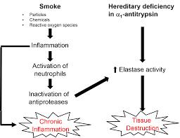Pathophysiology Of Emphysema Flow Chart Chronic Obstructive Pulmonary Disease Copd
