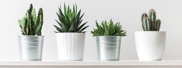 what s hot in plant pots garden