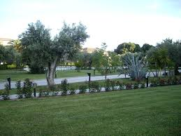Hotel Dev Conifers Green Pet Friendly Hotel South Italy The Hotel Is One Of The Few In