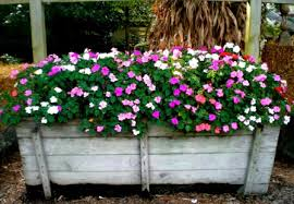 Small Picture Flower Gardening For Beginners Home Design Ideas