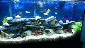 Aquarium Background Ideas Justpet