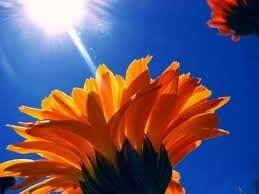 Share Obituary for Goldie Kendrick | Port Angeles, WA