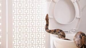 Menjaga kebersihan termasuk cara mencegah ular masuk rumah yang wajib dilakukan. Inilah Cara Mencegah Ular Masuk Rumah Dan Pertolongan Pertama Digigit Ular