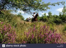 """Résultat de recherche d'images pour """"promenade à cheval à arcachon 19e"""""""