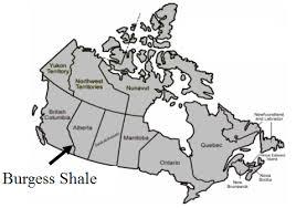 Image result for 1909 Charles Doolittle Walcott discovered Burgess Shale map