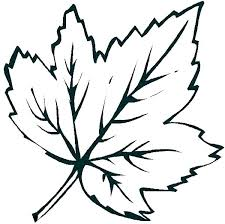 Leaf G Template Pot Pages Page Autumn Leaves Coloring Oak