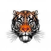 Fotka Tygr Lebka Tetování Ilustrace Na Bílém Pozadí 236994436