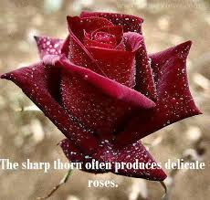 Beautiful Red Rose Quotes Best Of Beautifulredrosewithwaterdrops Quotes Picture 24 Tattoos N
