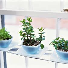 Small Picture 15 Phenomenal Indoor Herb Gardens