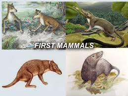 Image result for first mammals