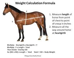 Miniature Horse Weight Chart Five Common Mistakes Made When Feeding A Horse Ecoequine