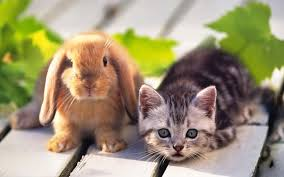 live pets wallpapers pets wallpapers collection