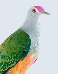 Leila Jeffreys works | Olsen Gallery Sydney Australia | Australian  wildlife, Rose crown, Bird