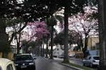 imagem de Nova Odessa São Paulo n-4