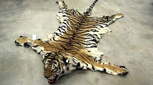animal skin rugs for illegal product bust nets ers news bear rug brown e animal skin rugs