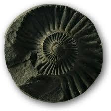 Image result for shaligram