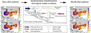 Evolution Of Sedimentary Organic Matter In A Small River