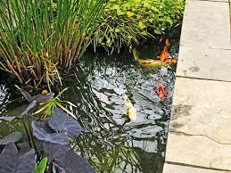 planting a pond australian handyman