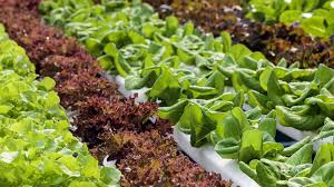 how to make the most of your hydroponic grow enhancer