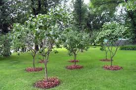 the most inspiring garden landscaping ideas for you fruit trees in small spaces decoration
