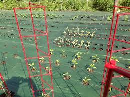 garden mats. Weed Barrier Garden Mats O