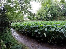 jardín botánico terra nostra en furnas