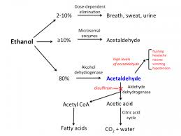 Disulfiram Reaction Alcohol_alcohol_addiction Tusom Pharmwiki