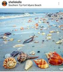 547 Best Fort Myers Beach Images In 2019 Fort Myers Beach