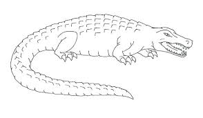 Crocodile Coloring Pages Crocodile Coloring Pages For Kids Realistic