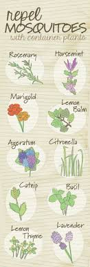 23 Diagrams That Make Gardening So Much Easier. Plants That Repel  MosquitoesMosquito ...