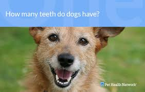 Dr Ernies Top 10 Dog Dental Questions And His Answers