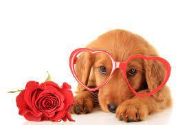 Valentines day dog, Puppy valentines ...